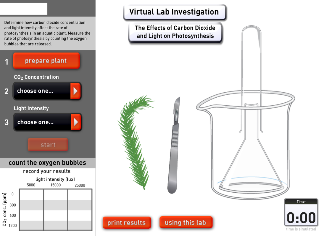 photosynethesis virtual labs Photosynthesis tutorial:  based on your data, draw a conclusion regarding how light intensity affects the rate of photosynthesis virtual lab #2.